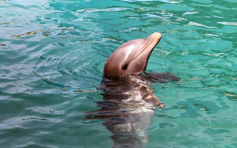 Delfin Bahamas