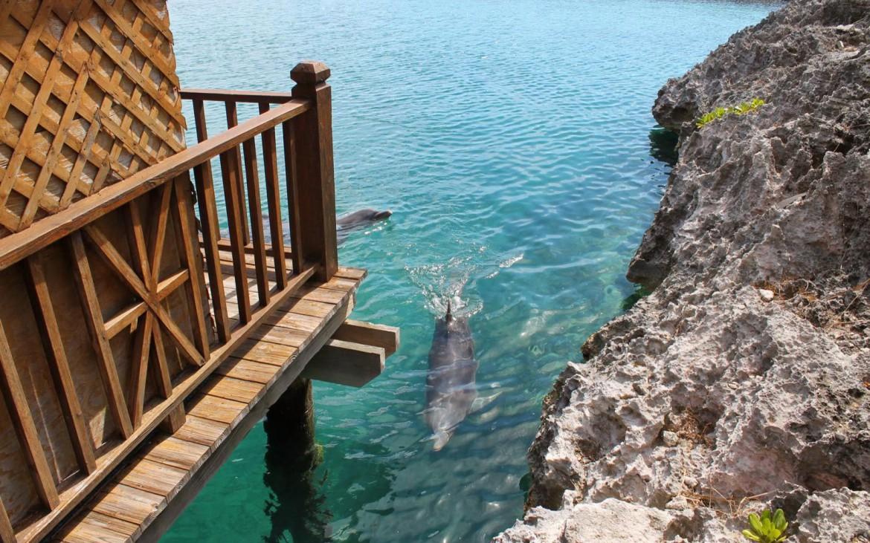 Delfine Blue Lagoon