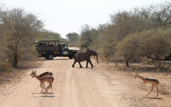 Kleiner Elefant und Antilopen Krüger Park
